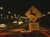 A Deer-Crossing Sign in the Middle of Roosevelt Boulevard