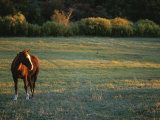 A Horse in a Field at Twilight
