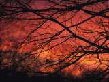 Twilight View Through Silhouetted Tree Branches