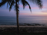 A Palm Tree Bears Witness to a Beautiful Tropical Waterside Sunset