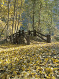 A Sentinel Meadow Footbridge Blanketed in Autumn Foliage