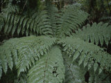 Detail of Fern in Rain Forest