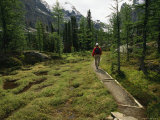 A Hiker Treks Along a Path in Yoho National Park