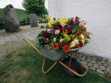 A Large Arrangement of Flowers in a Wheel Barrow