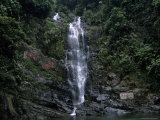 Waterfall Cascading Down Rock Face in Subtropical Rainforest