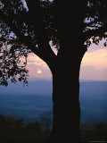 Sunset and Silhouetted Oak over the Shenandoah Valley  Dickeys Ridge Visitors Center