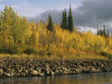 Sunset Shines on Birch and Willow Trees Along the Ramparts River