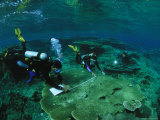 Divers Mapping the Area Find Fragile Table Coral in Kantons Lagoon
