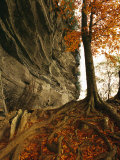 Raven Rock and Autumn Colored Beech Tree