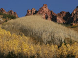 Aspen Trees  Bared and Filled with Leaves  Climb a Mountain Face