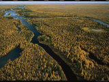 Aerial View of Forested Land and River in Wapusk National Park