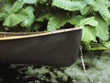 The Bow of a Canoe Tethered Near a Shore with Lush Foliage