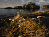 Orange Leichen-Covered Rocks at Isle Royale National Park  Michigan