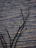 Tree Branches Silhouetted Against Lake Victoria  Kisumu  Kenya