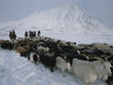 Nomadic Family Crosses Utreg Pass Enroute to Winter Pastures