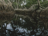 Lagoon Where Watermarks on Mangrove Roots Show Depth Changes