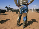 A Cowboy Rounds up Some Cattle for Branding