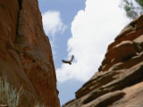 An Raven Soars Above the Gorges and Slot Canyons Along the Arizona/Utah Border