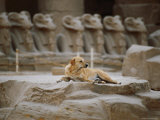 A Stray Dog Rests on the Remnants of a Pedestal