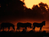 A Trio of Zebras Silhouetted in an Orange Mist at Sunrise