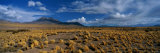 A Wide-Angle View of Altiplano  Chile