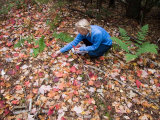 A Woman Collects Colorful Leaves on a Fall Day