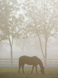 A Thoroughbred Gelding Crops the Bluegrass at the Kentucky Horse Park