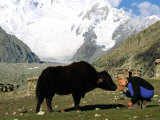 A Woman Bows to Greet a Yak in Pakistan