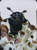 Extreme Close-up of a Beetle on a Lichen