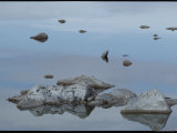 Rocks Reflected in the Water at Mono Lake