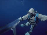A Blue Shark Bites the Hand of a Diver Wearing a Chain Mail Suit