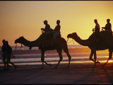 People Riding Camels on a Beach