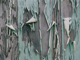 Paint Peels from the Walls of a Home Abandoned after a Hurricane