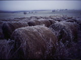 Bales of Hay Covered with Morning Frost
