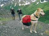A Couple Hikes with Their Dog Along the Crow Pass Trail in Alaska