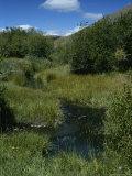 Grassy Lemhi Pass