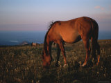 A Close View of a Wild Horse Grazing at Twilight