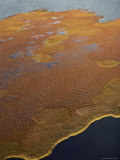 Aerial View of Boggy Tundra