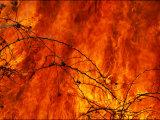 Fire Consumes the Prairie