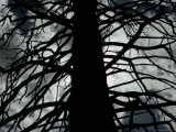 Silhouetted Tree Trunk