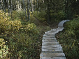 A Wooden Staircase Winds Through the Forest