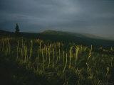 Summer Wildflower Meadow with Bitterroot Range in Background