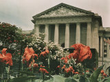 Flowers in Front of a Columned Building in Washington  DC