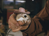 A Person Holding a Kangaroo Rat That Sports a Miniature Cowboy Hat