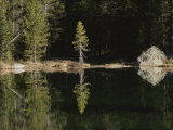 Shoreline Trees and Rock Reflected on the Surface of String Lake