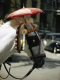 A Horse Sports a Small Umbrella to Protect its Head from the Sun