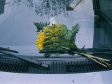 A Bouquet of Flowers Left on Someones Windshield