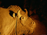 Detail of a Bison Shaped from Clay Approximately 14 000 Years Ago