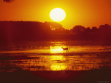 Distant Deer Silhouetted in a Marsh by a Low-Lying Sun