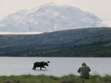 A Photographer Takes a Picture of a Bull Moose Wading in Warden Lake